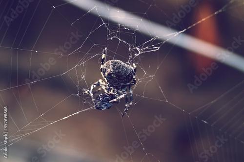 Slika na platnu Macro Shot Of Spider On Web