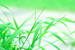 canvas print picture - Close-up Of Grass Growing On Field