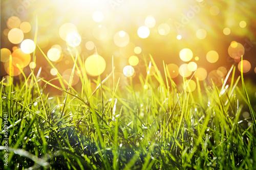 Obraz Lush green grass on sunny day, closeup. Bokeh effect - fototapety do salonu