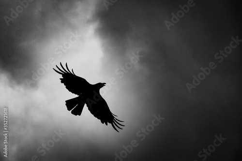 Valokuva Low Angle View Of Silhouette Bird Flying Against Sky