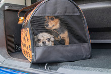 Carriage Of Two Pets By Car. S...