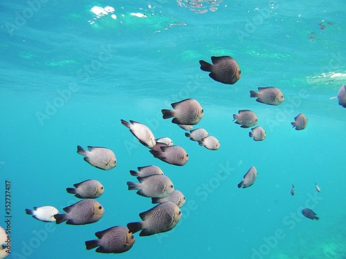 Photo Close-up Of Fishes Swimming In Sea