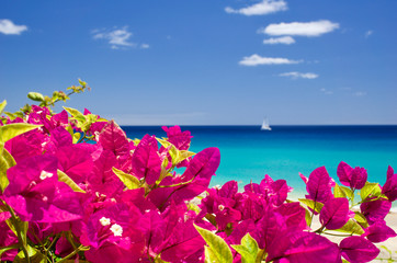 Fototapeta Morze Close-up Of Bougainvillea Blooming By Sea Against Sky
