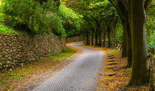 Brick Paved Alley Road With Tr...