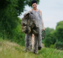 Smiling Woman Standing By Irish Wolfhound On Grassy Field