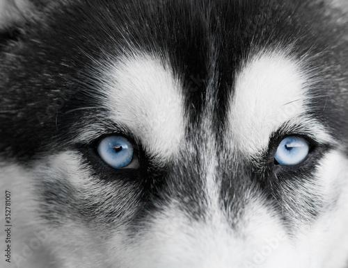 Close-up Portrait Of Dog Canvas Print