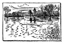 Cranberry Bog, Vintage Illustr...