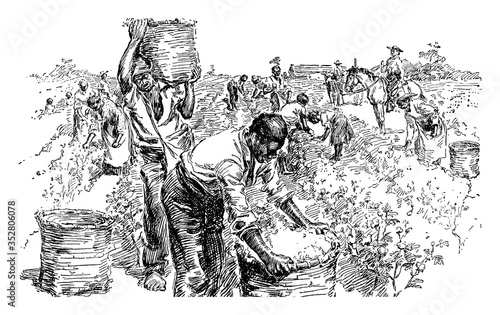Cotton Plantation, vintage illustration. Fototapet