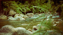 Close Up Of River Stream And Rocks
