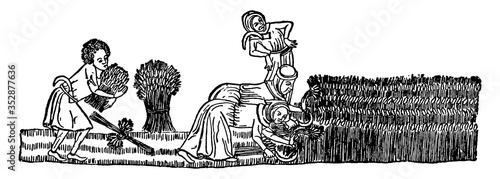 Fotografie, Obraz Reaping Grain the 14th Century, vintage illustration