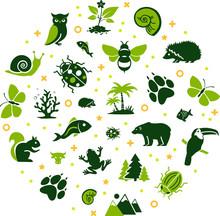 Wildlife / Biodiversity Vector...