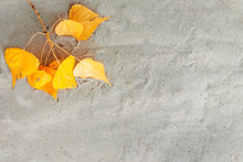 Autumn, Yellow Leaves Lie On S...