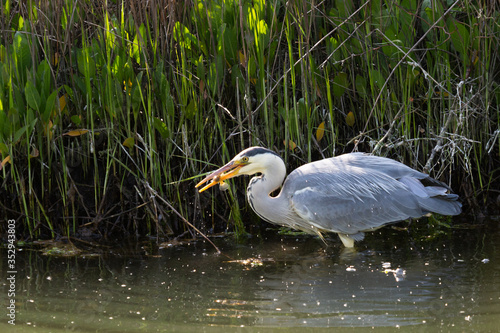 Photo fishing heron