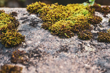 Moss On The Gray Stone. Moss Macro. Nature Close Up. Ecosystem Concept. Dirty Stone Surface. Wet Place. Landscape Concept. Grunge Wallpaper. Environment Background.