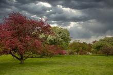 Dark Stormy Skies Over Green G...