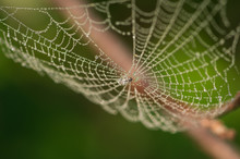 Closeup Of Spider Web Covered ...