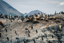 A Group Of Wild Sea Lions And ...