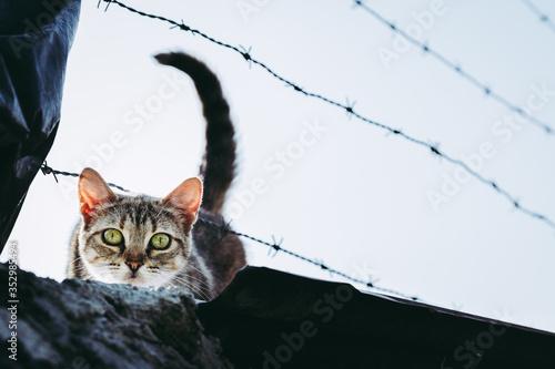 Photographie Portrait d'un jeune chat tigré au regard curieux