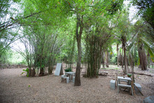 Bamboo Garden With Relaxing Se...