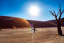 Bright Desert Sun In The Middle Of The Day At Deadvlei, Namib National Park, Namibia