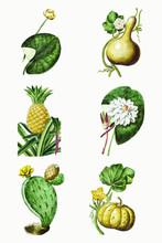 Mixed Set Of Green Plant Vector