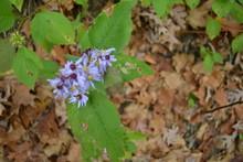 Dainty Purple Flowers 1