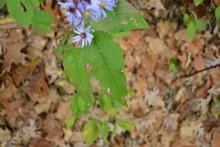 Dainty Purple Flowers 3