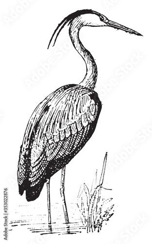 Photo Heron bird, vintage illustration.
