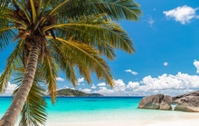 Touched Tropical Beach In Similan Island,Coconut Tree Or Palm Tree On The Beach.