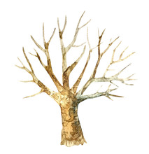 Watercolor Drawing Of A Tree W...