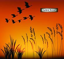 Vector Illustration Sunset Mig...