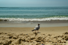 Seagull Portrait Against Sea S...