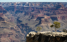 Juniper Trees Overlooking The Grand Canyon