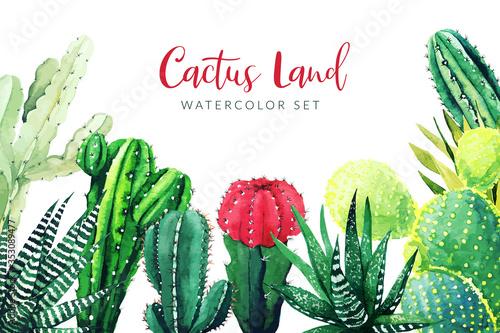 Fototapeta Cactus and succulents plants, horizontal background obraz