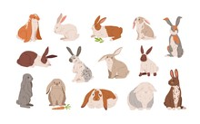 Set Of Different Breed Cute Realistic Rabbits Vector Illustration. Collection Of Various Colorful Hare Sitting, Lying And Standing Isolated On White. Wild Or Domestic Funny Animal With Long Ears