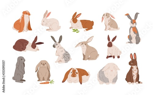 Valokuva Set of different breed cute realistic rabbits vector illustration
