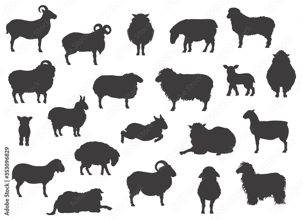Fototapeta Sheep breeds black silhouettes collection. Farm animals set. Flat design