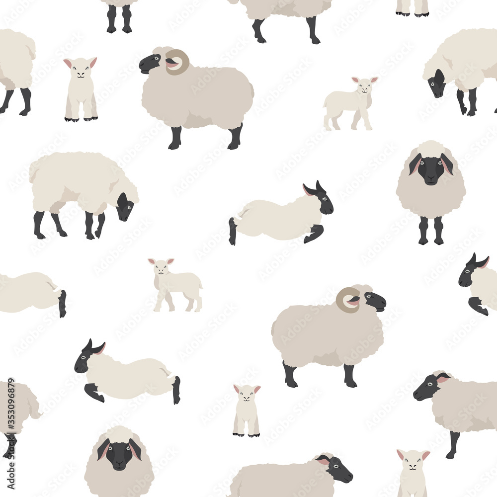 Fototapeta Sheep poses seamless pattern. Farm animals set. Flat design