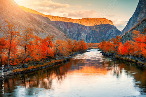 Obraz Autumn landscape of Chulyshman river gorge in Altai mountains, Siberia, Russia. Red autumn trees and their reflections in the water at sunset - fototapety do salonu