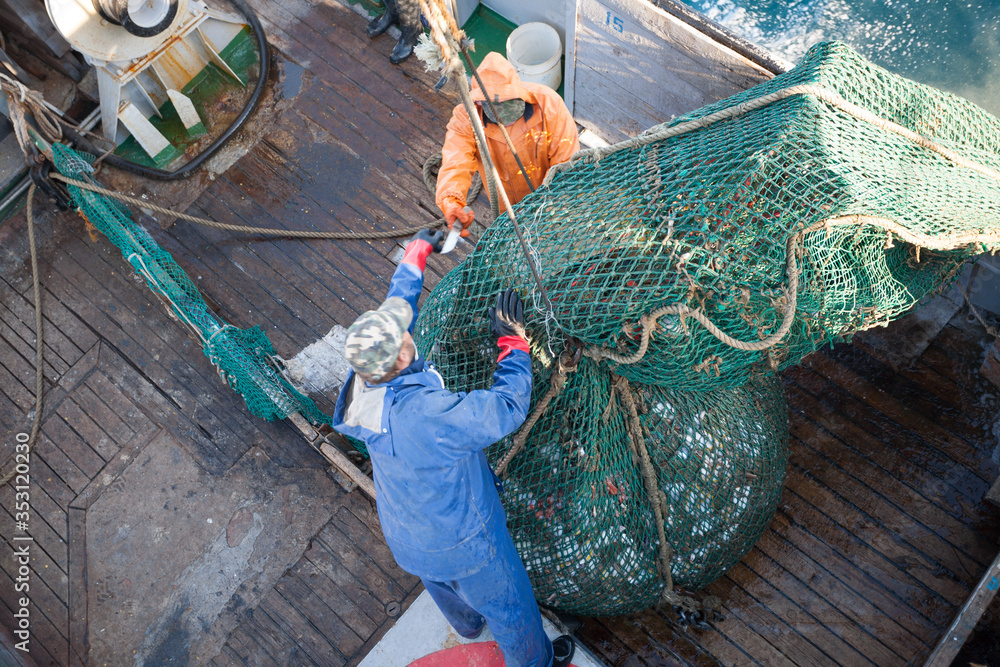 Fototapeta Fishermen lifted a trawl with fish aboard