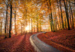 Road up mountain during heavy autumn colors with sunlight
