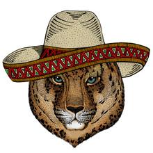 Leopard, Jaguar Face. Sombrero...
