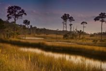 Marshlands Of Northern Florida In Tallahassee, Florida