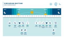 Circadian Rhythm And Sleep-wake Cycle