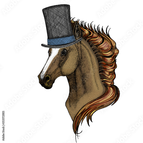 Fototapeta Horse, steed, courser. Portrait of wild animal. Cylinder hat.