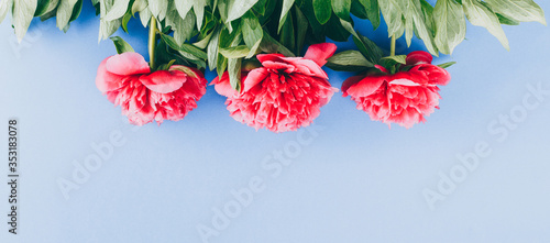 Fotografie, Obraz pink peonies on a blue background, copy space, long banner