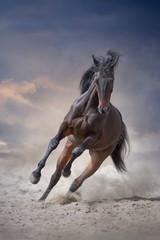 Obraz na Szkle Koń Bay stallion with long mane run gallop