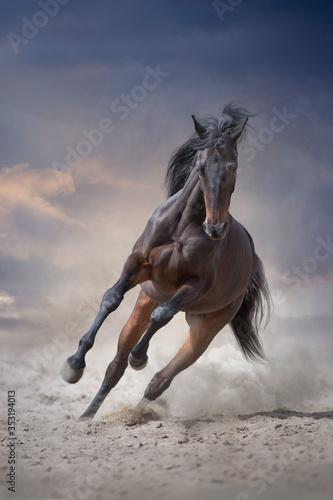 Obraz na plátně Bay stallion with long mane run gallop
