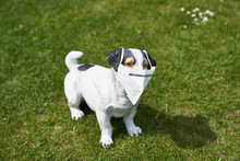 Kitschy Dog Figure On Lawn With Kn95 Protective Mask