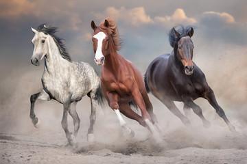 Fototapeta Do pokoju Horses free run on desert storm against sunset sky